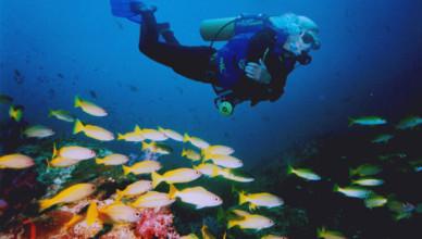 Diving at Raya Island