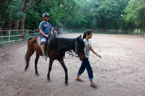 horsecampDSC07331