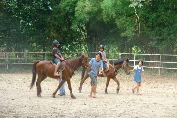horsecampDSC07341