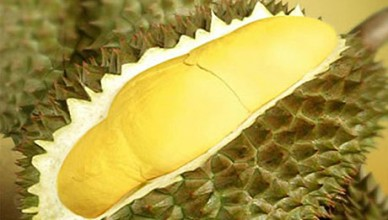 Data_durian2